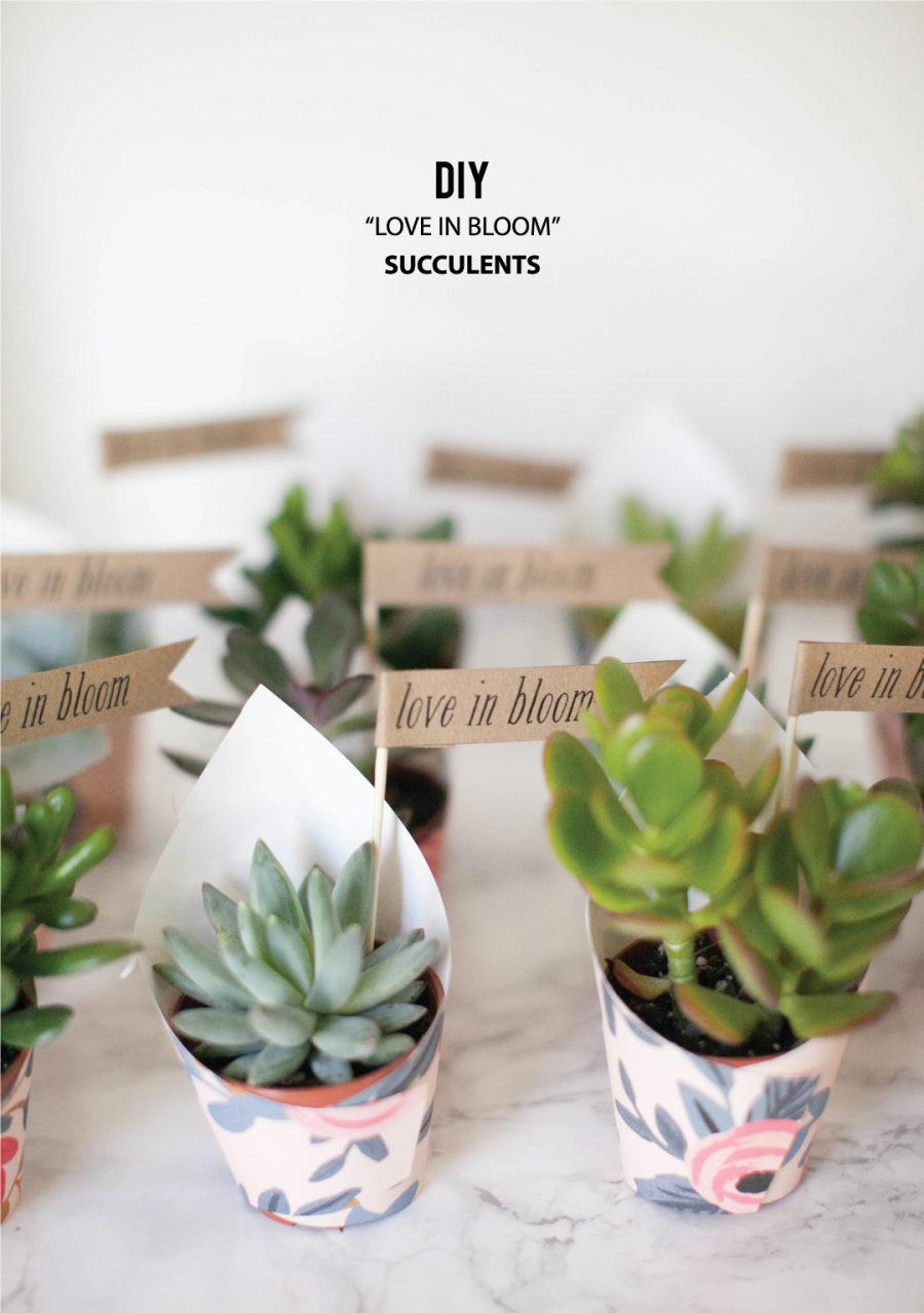 DIY \'Love In Bloom\' Succulent Favors