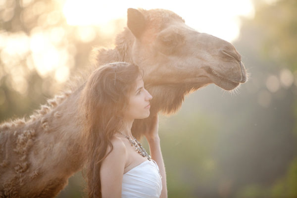 Bride and camel
